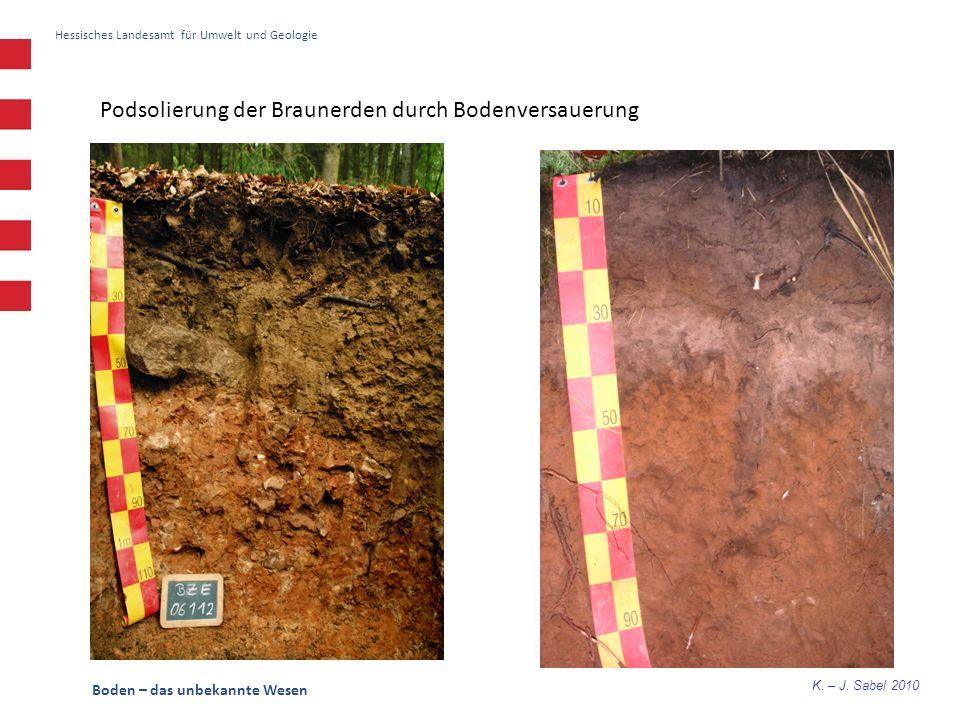 Podsolierung der Braunerden durch Bodenversauerung