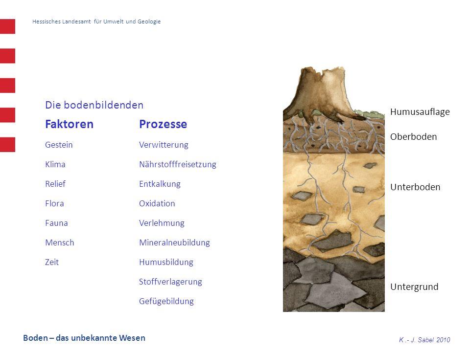 Faktoren Prozesse Die bodenbildenden Humusauflage Oberboden Unterboden