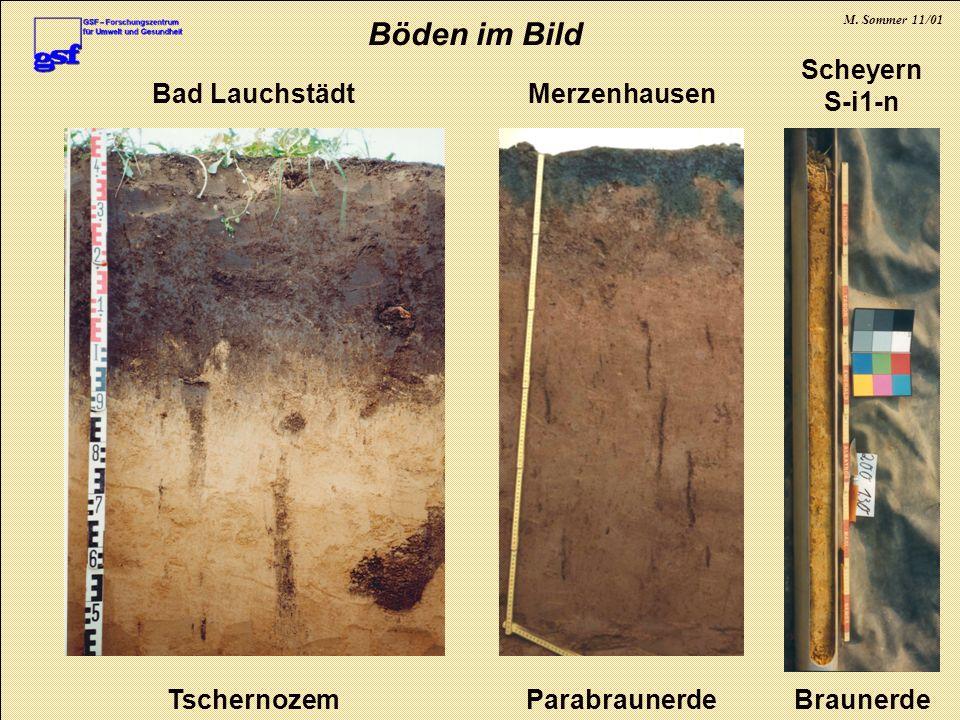 Böden im Bild Braunerde Scheyern S-i1-n Tschernozem Bad Lauchstädt
