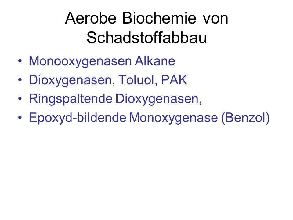 Aerobe Biochemie von Schadstoffabbau