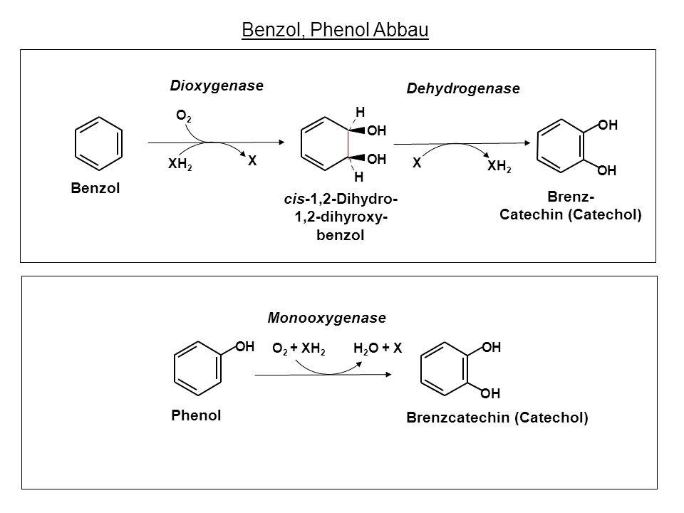 Benzol, Phenol Abbau Dioxygenase Dehydrogenase Benzol cis-1,2-Dihydro-