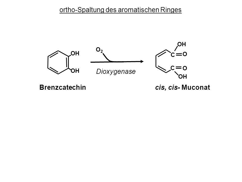 ortho-Spaltung des aromatischen Ringes