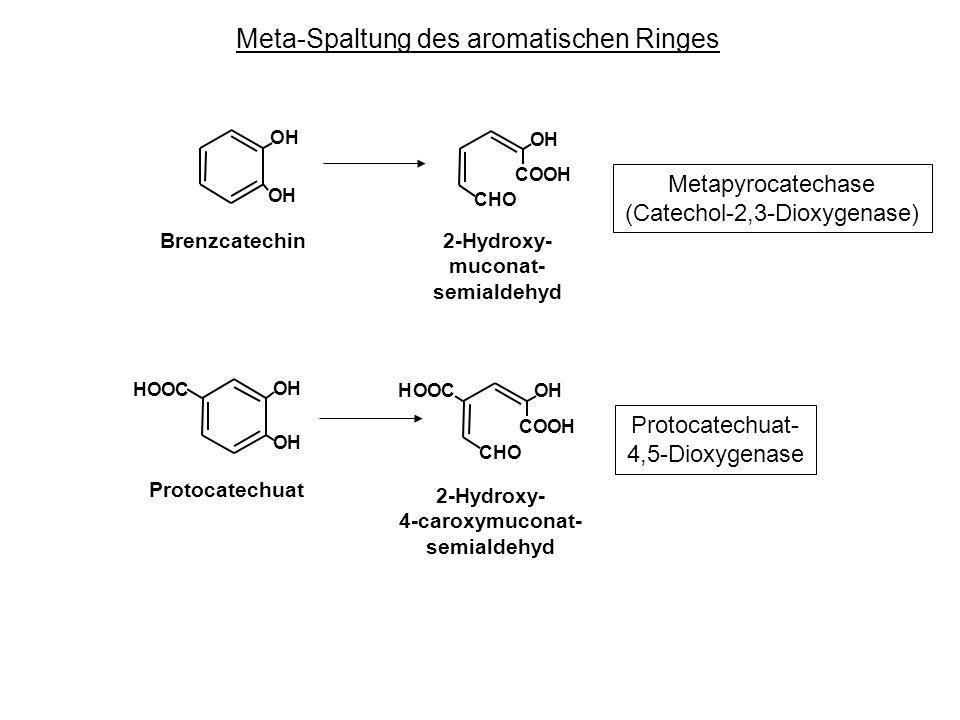 (Catechol-2,3-Dioxygenase)