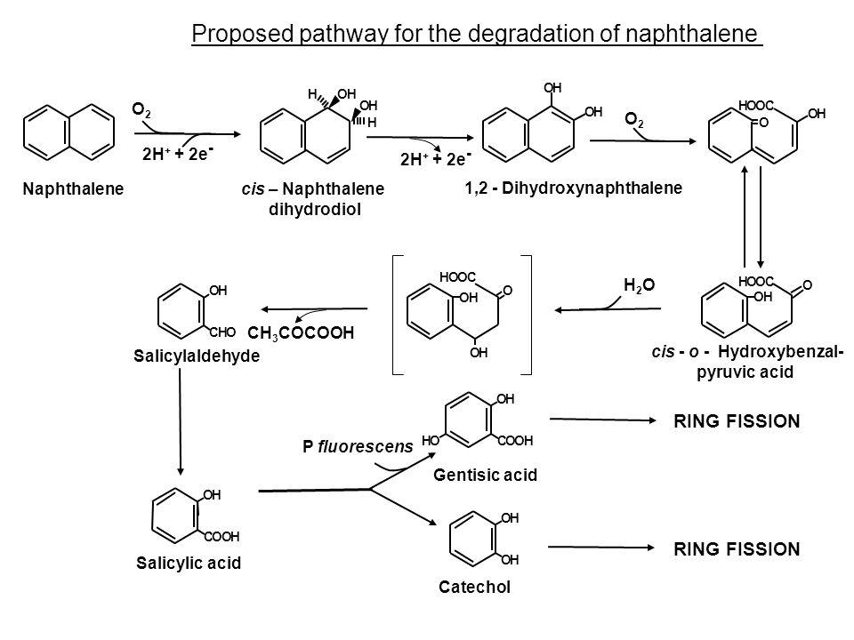 cis - o - Hydroxybenzal-
