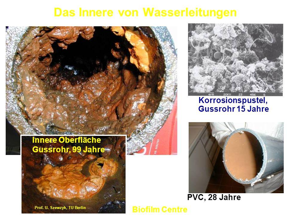 Das Innere von Wasserleitungen
