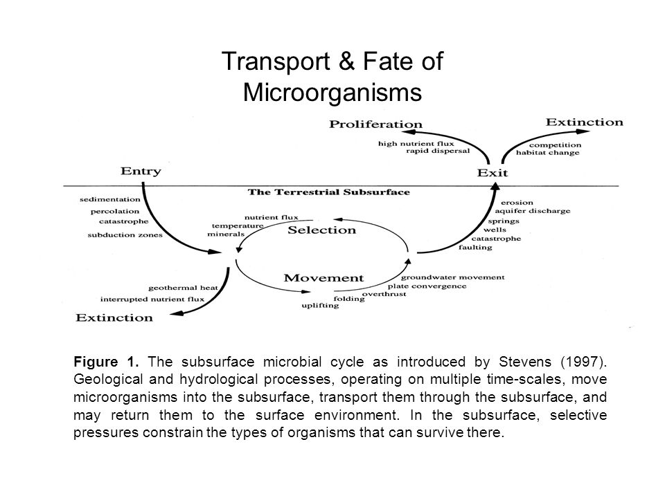 Transport & Fate of Microorganisms
