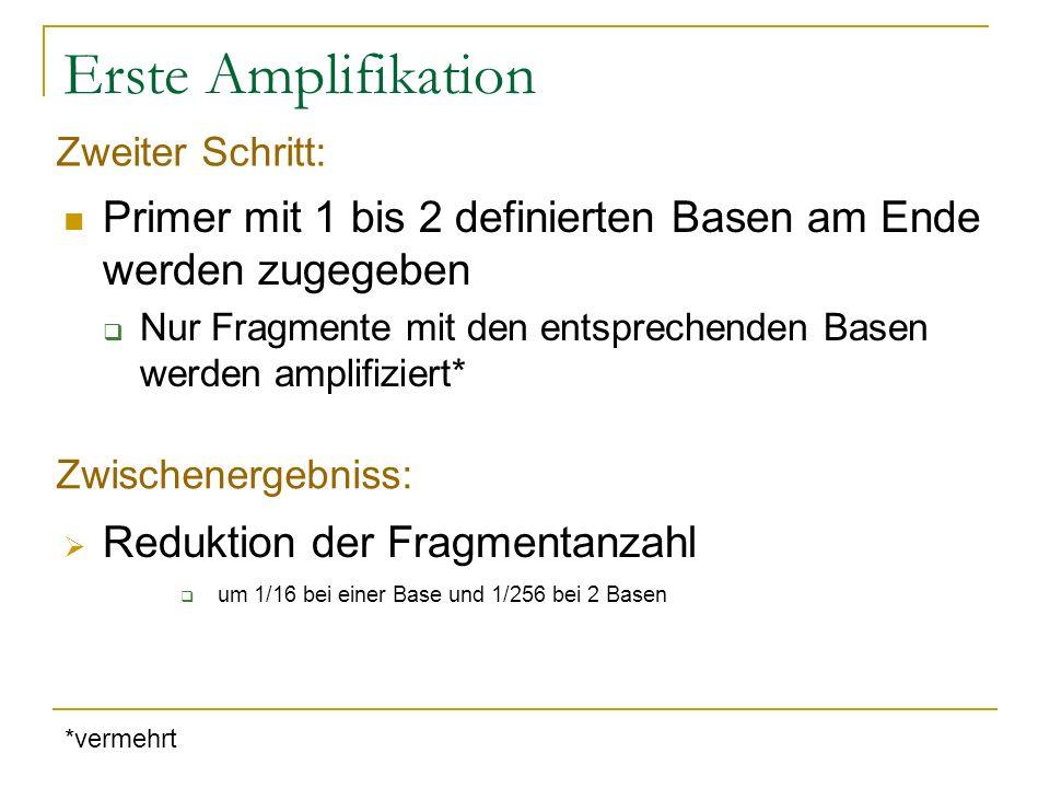 Erste Amplifikation Zweiter Schritt: Primer mit 1 bis 2 definierten Basen am Ende werden zugegeben.
