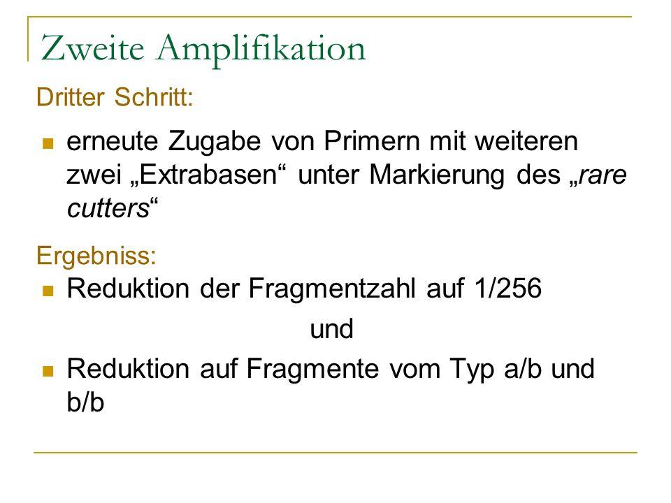 """Zweite Amplifikation Dritter Schritt: erneute Zugabe von Primern mit weiteren zwei """"Extrabasen unter Markierung des """"rare cutters"""