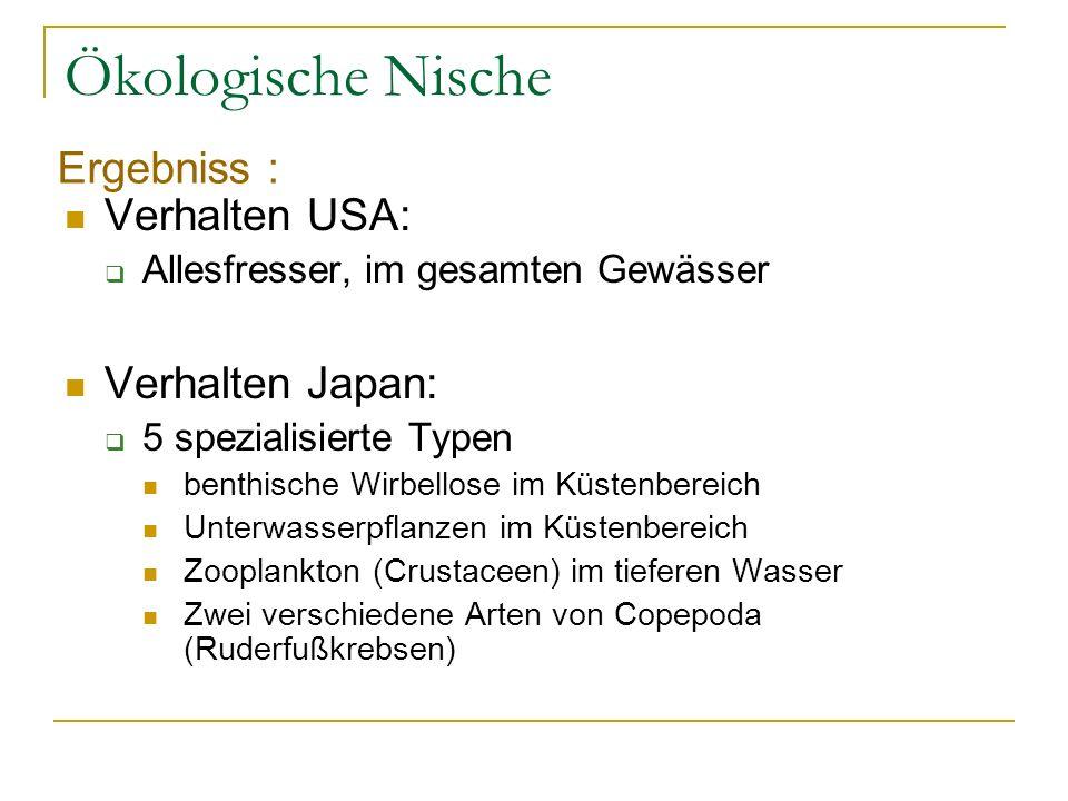 Ökologische Nische Ergebniss : Verhalten USA: Verhalten Japan: