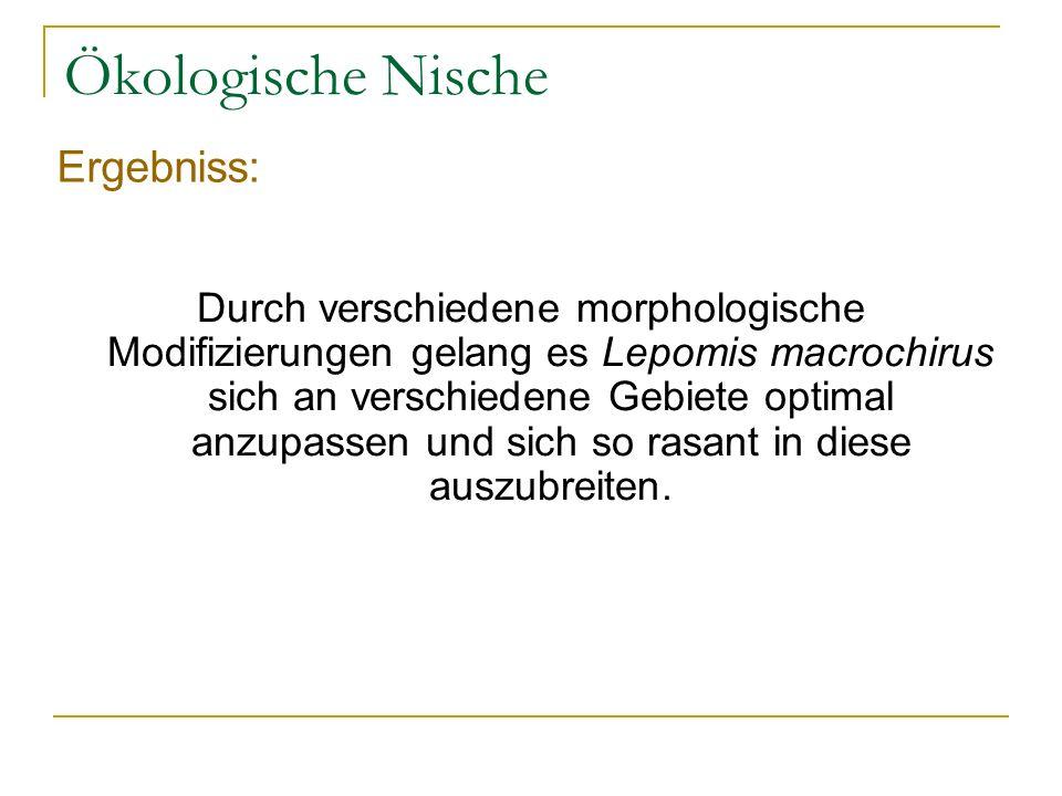 Ökologische Nische Ergebniss: