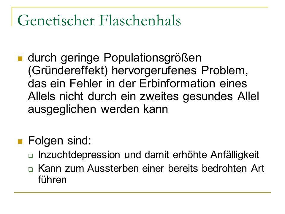 Genetischer Flaschenhals