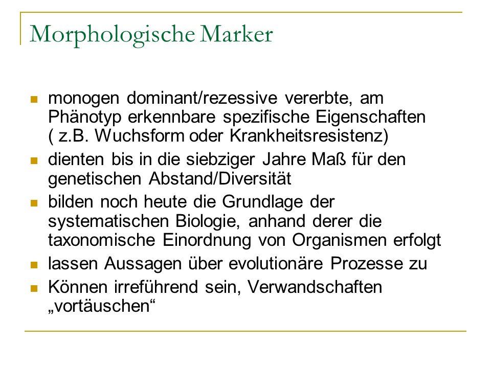 Morphologische Marker