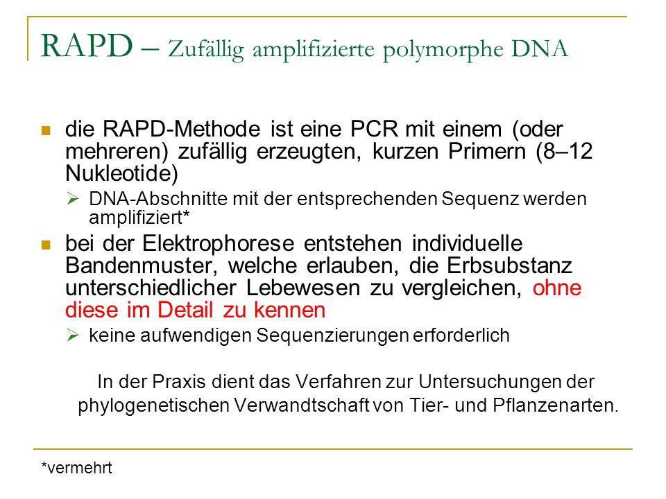 RAPD – Zufällig amplifizierte polymorphe DNA