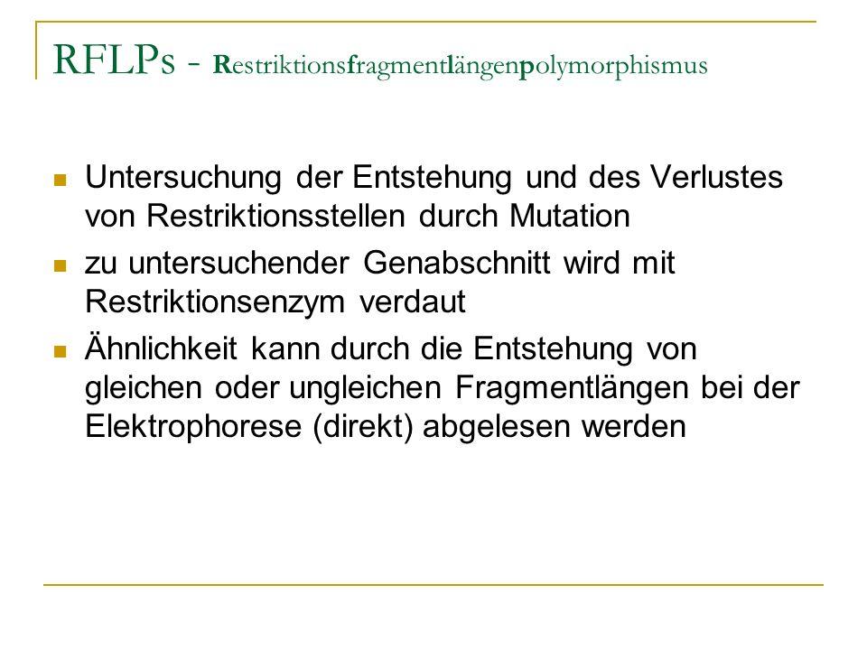 RFLPs - Restriktionsfragmentlängenpolymorphismus