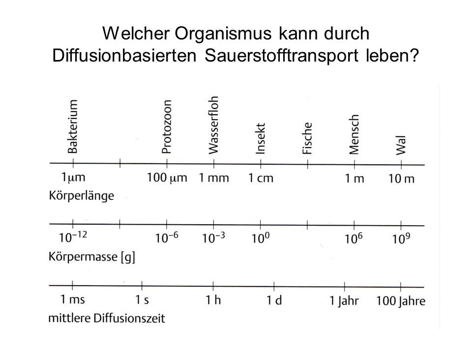 Welcher Organismus kann durch Diffusionbasierten Sauerstofftransport leben