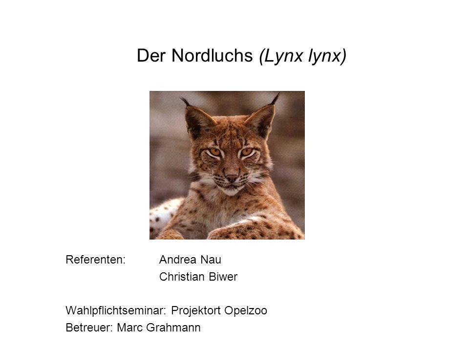 Der Nordluchs (Lynx lynx)