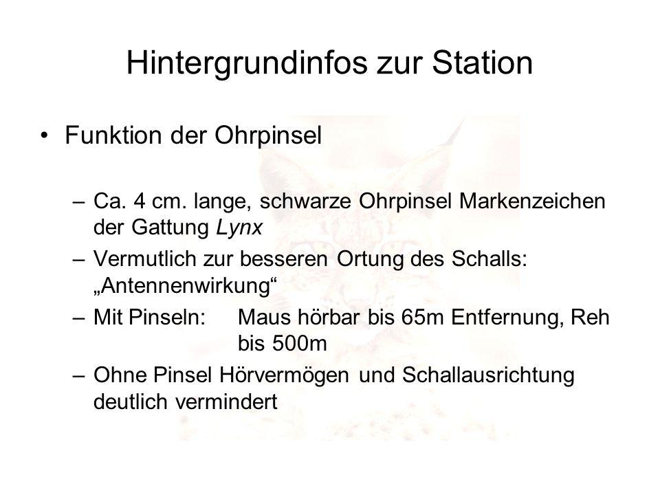 Hintergrundinfos zur Station