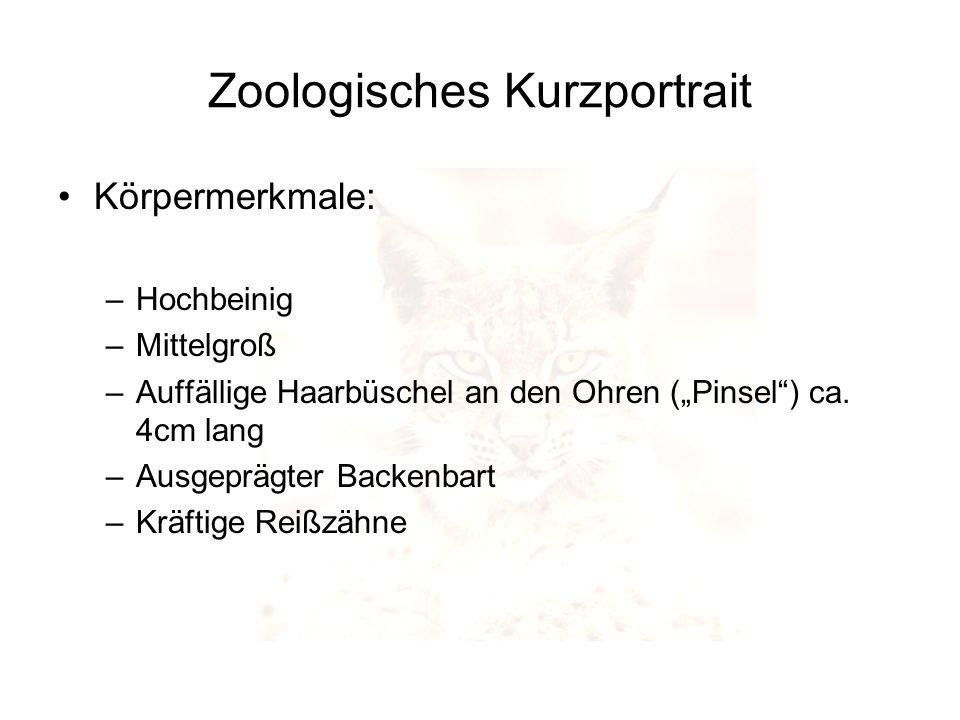 Zoologisches Kurzportrait
