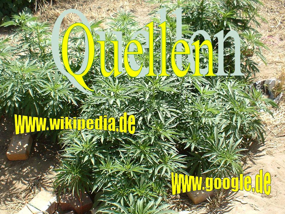 Quellen www.wikipedia.de www.google.de