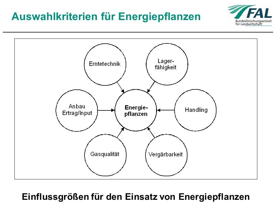 Auswahlkriterien für Energiepflanzen