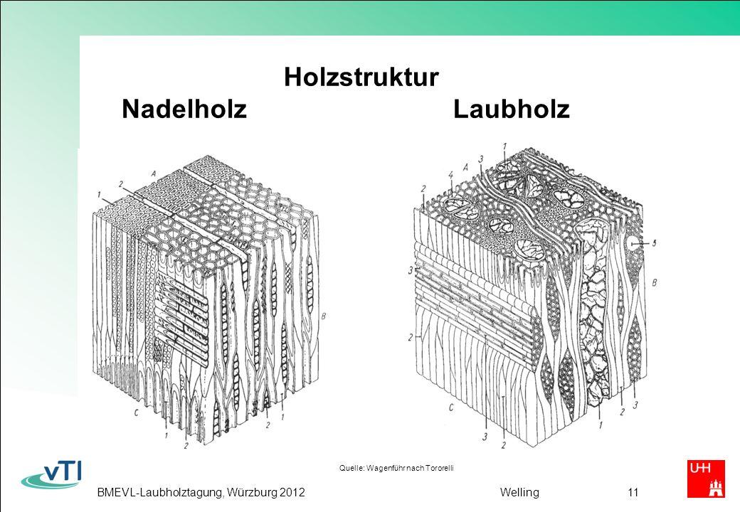 Holzstruktur Nadelholz Laubholz
