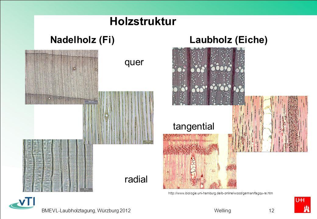 Holzstruktur Nadelholz (Fi) Laubholz (Eiche)