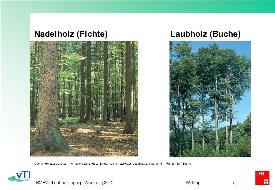 Nadelholz (Fichte) Laubholz (Buche)