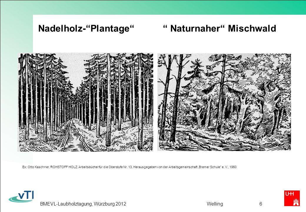 Nadelholz- Plantage Naturnaher Mischwald