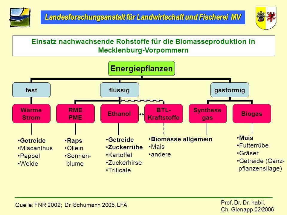 Einsatz nachwachsende Rohstoffe für die Biomasseproduktion in Mecklenburg-Vorpommern. Mais. Futterrübe.