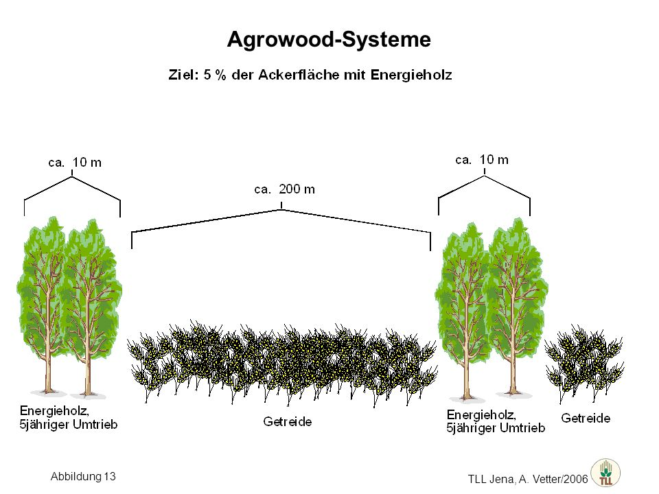 Agrowood-Systeme TLL Jena, A. Vetter/2006 Abbildung 13