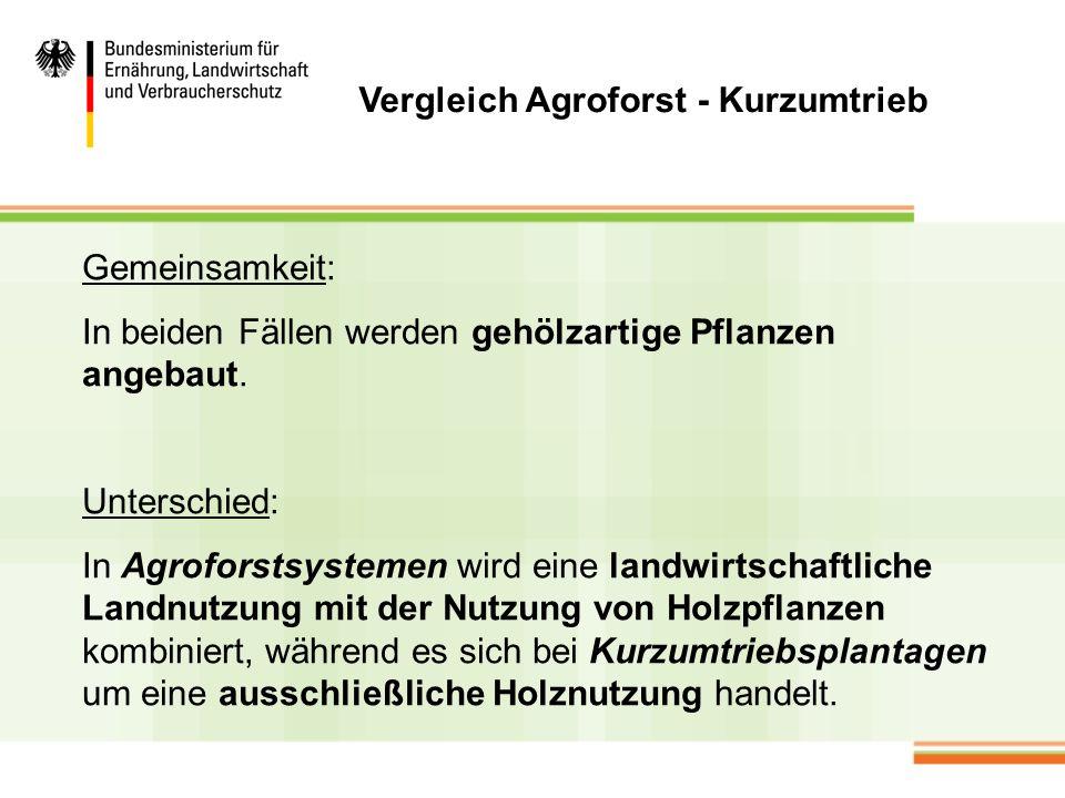 Vergleich Agroforst - Kurzumtrieb