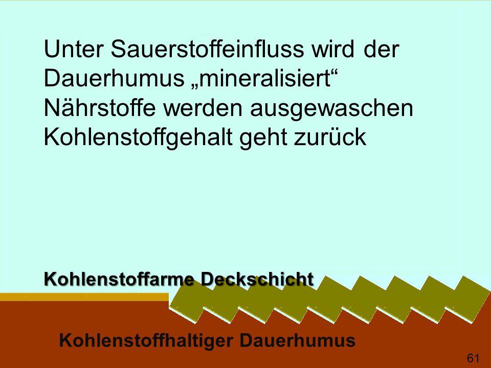 """Unter Sauerstoffeinfluss wird der Dauerhumus """"mineralisiert"""
