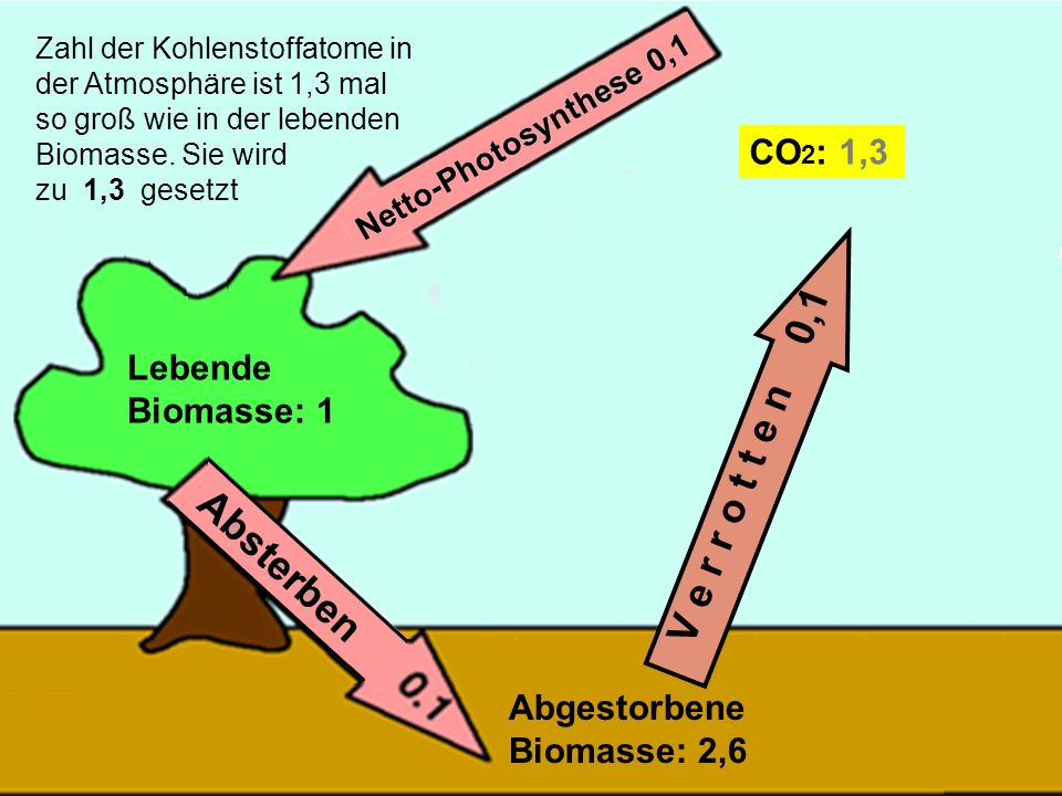 V e r r o t t e n 0,1 CO2: 1,3 Lebende Biomasse: 1