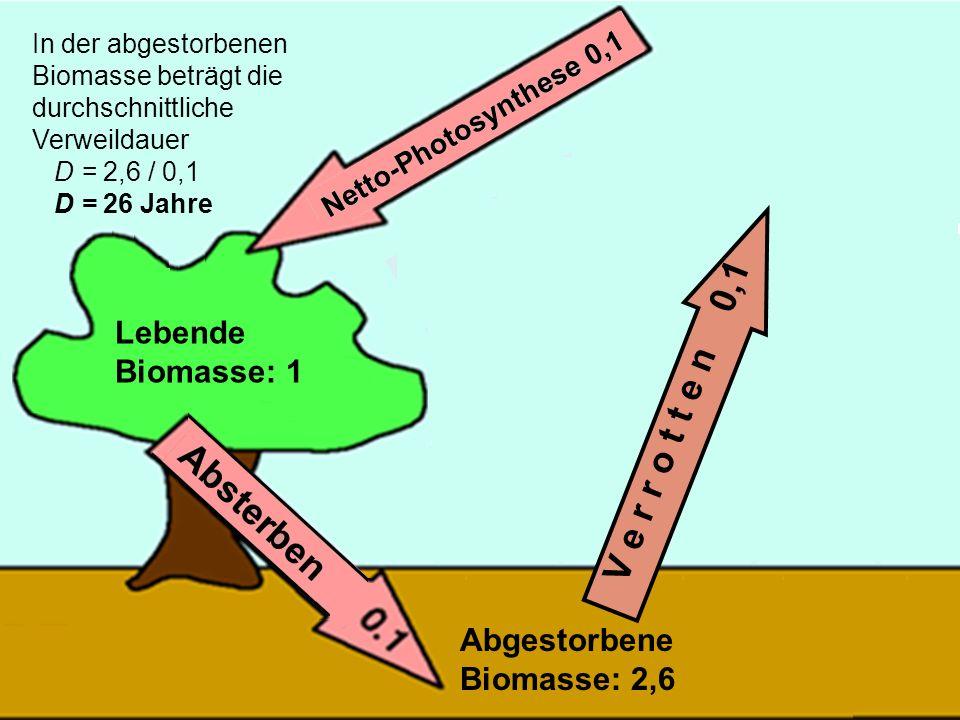 V e r r o t t e n 0,1 Lebende Biomasse: 1 Abgestorbene Biomasse: 2,6
