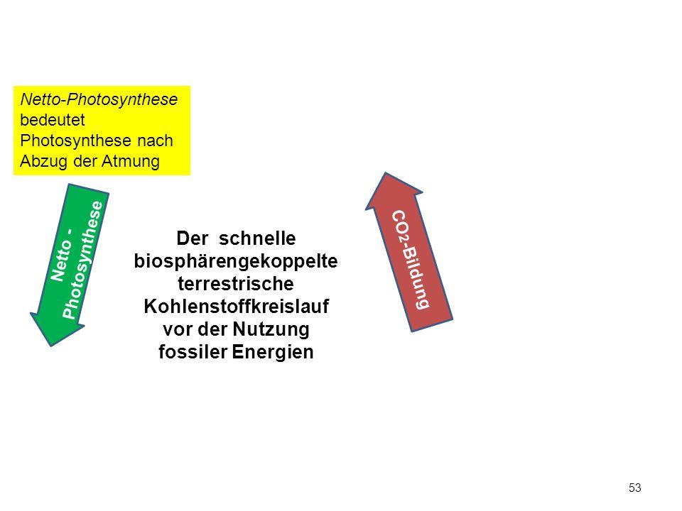 Netto-Photosynthese bedeutet Photosynthese nach Abzug der Atmung