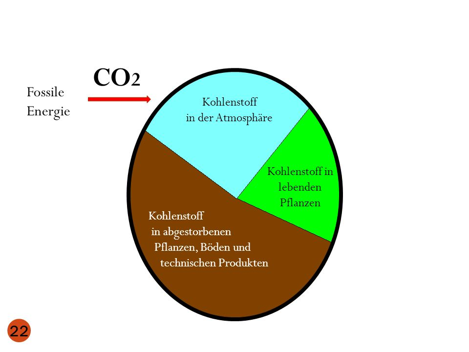 Kohlenstoff in lebenden Pflanzen