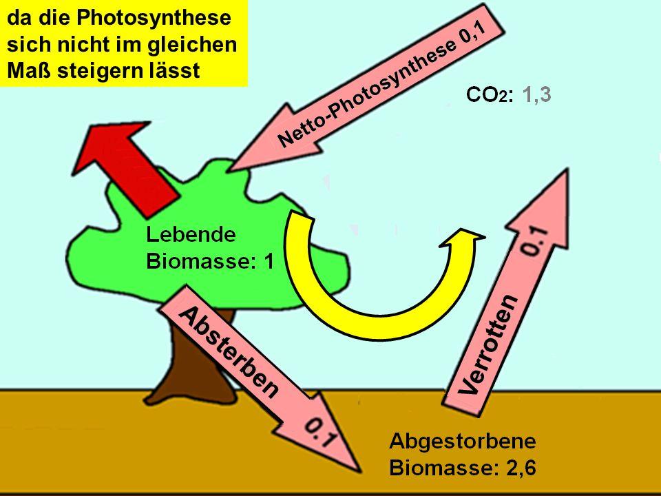 da die Photosynthese sich nicht im gleichen Maß steigern lässt