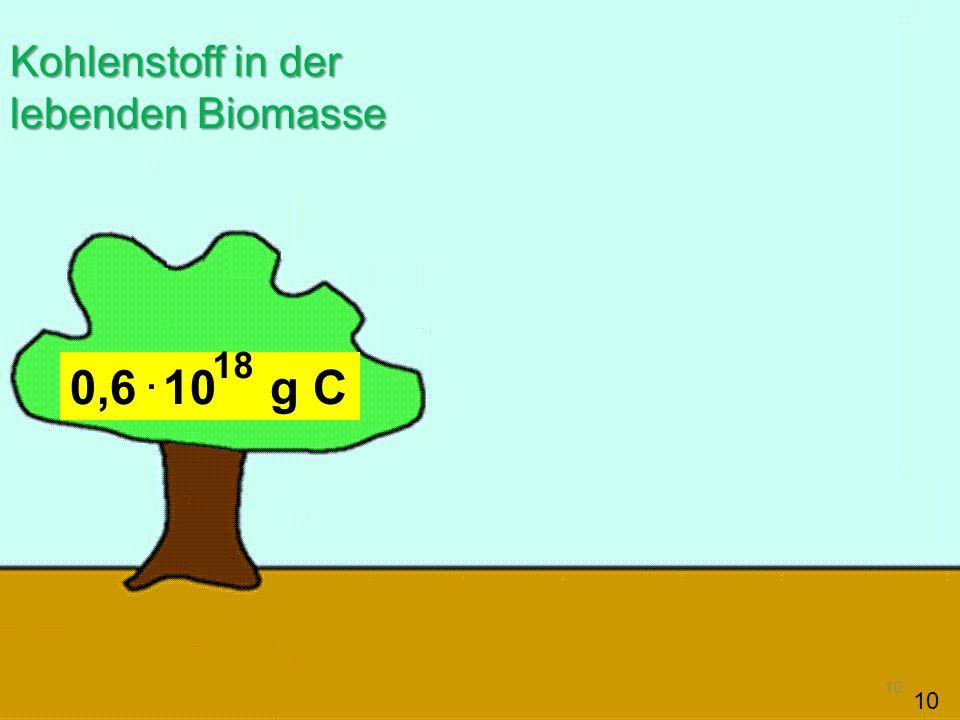Kohlenstoff in der lebenden Biomasse