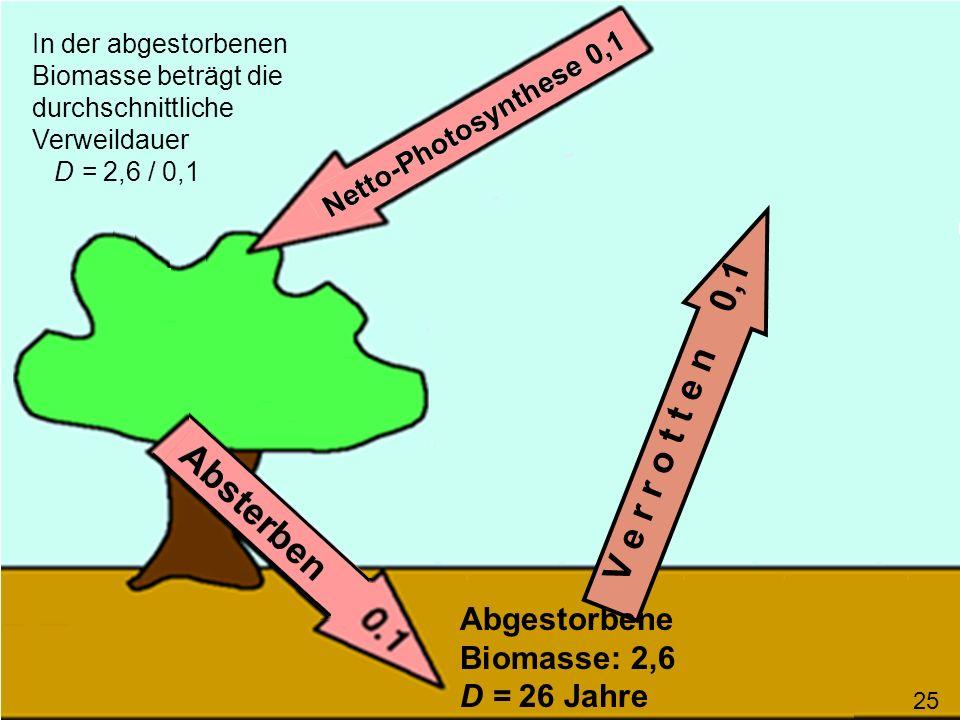 V e r r o t t e n 0,1 Abgestorbene Biomasse: 2,6 D = 26 Jahre
