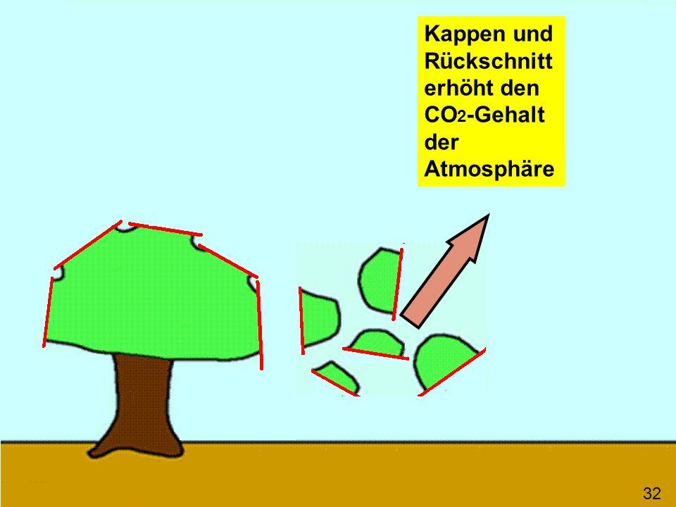 Kappen und Rückschnitt erhöht den CO2-Gehalt der Atmosphäre
