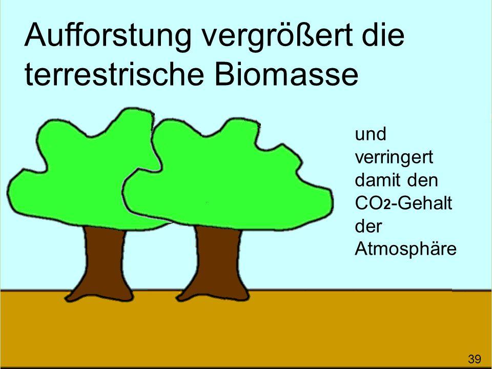 Aufforstung vergrößert die terrestrische Biomasse