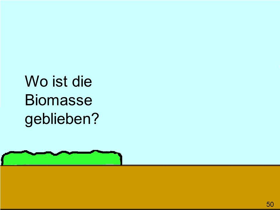 Wo ist die Biomasse geblieben