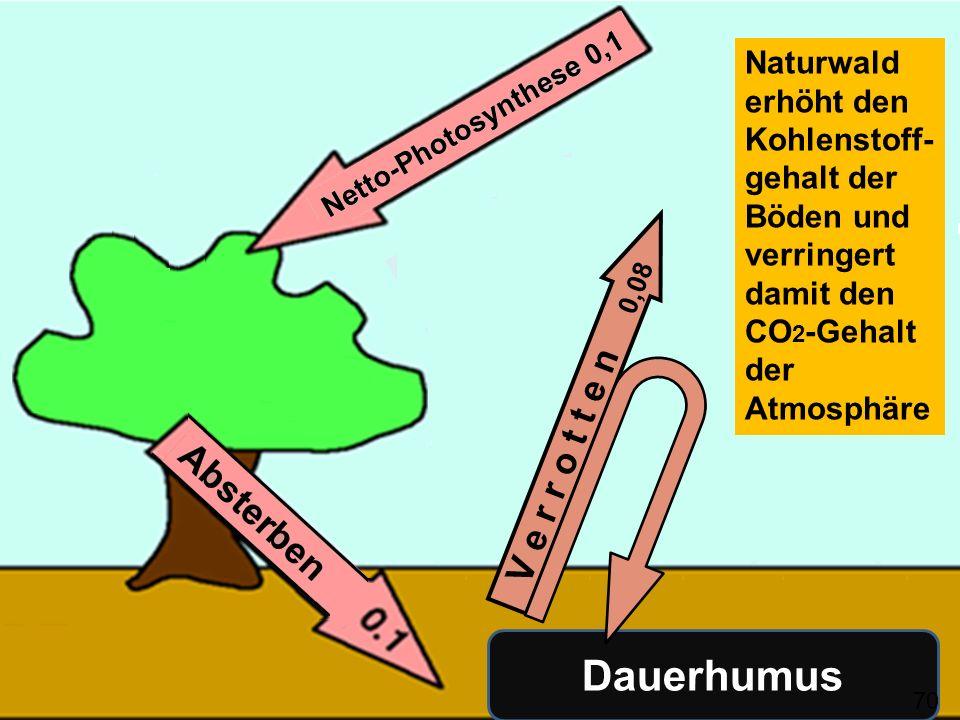 Naturwald erhöht den Kohlenstoff-gehalt der Böden und verringert damit den CO2-Gehalt der Atmosphäre