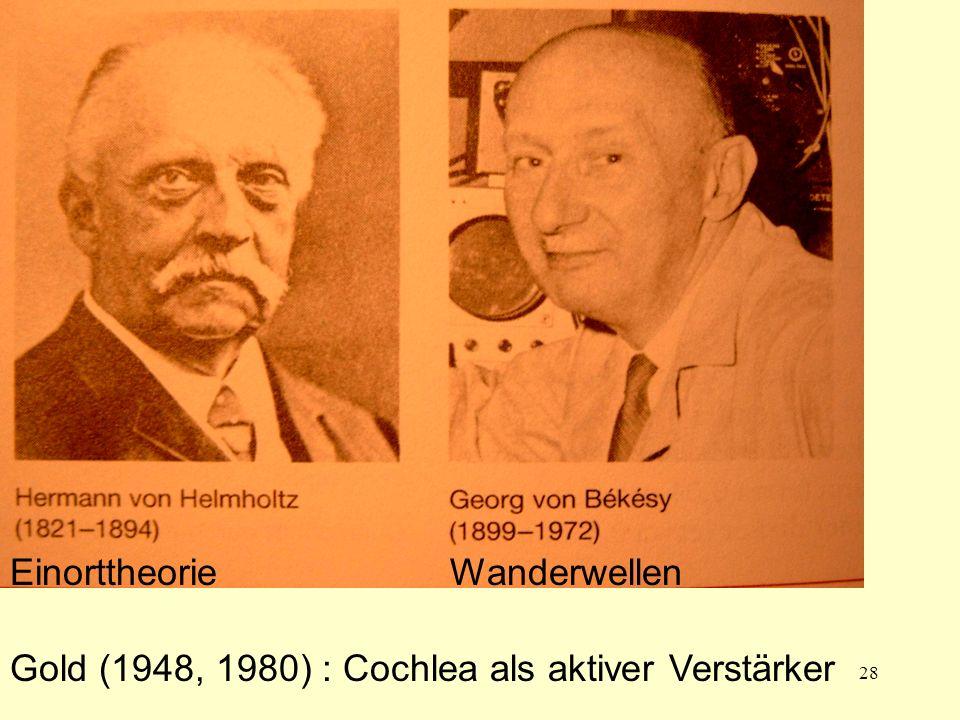 Helmholtz Bekesy Einorttheorie Wanderwellen