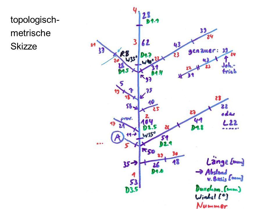 topologisch- metrische Skizze