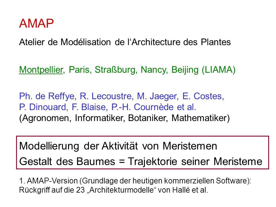 AMAP Modellierung der Aktivität von Meristemen