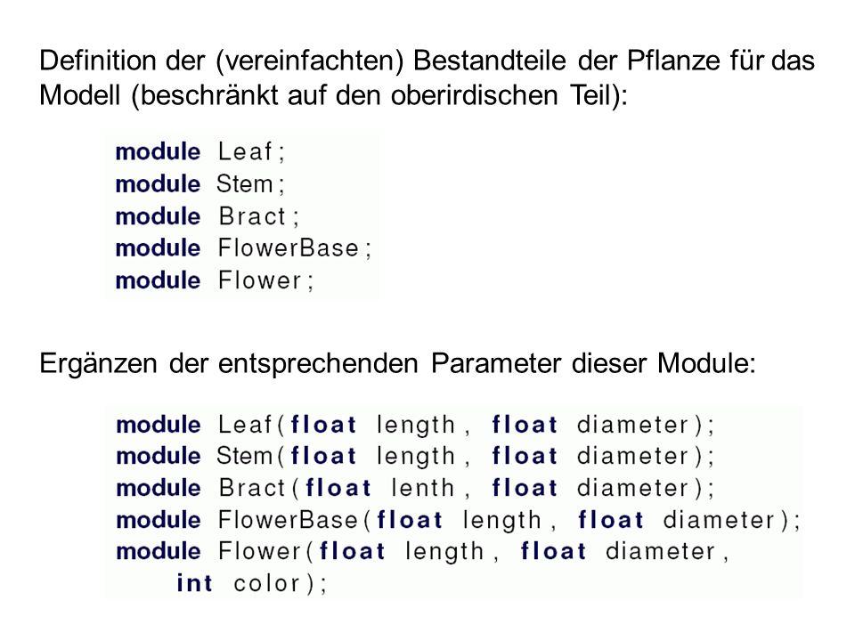 Definition der (vereinfachten) Bestandteile der Pflanze für das Modell (beschränkt auf den oberirdischen Teil):