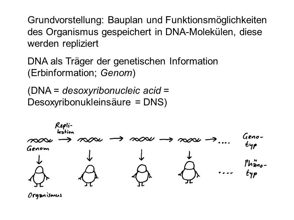 Grundvorstellung: Bauplan und Funktionsmöglichkeiten des Organismus gespeichert in DNA-Molekülen, diese werden repliziert