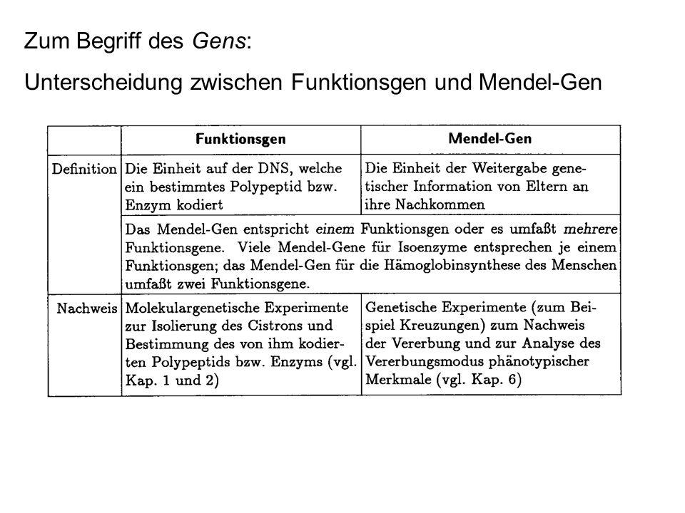 Zum Begriff des Gens: Unterscheidung zwischen Funktionsgen und Mendel-Gen