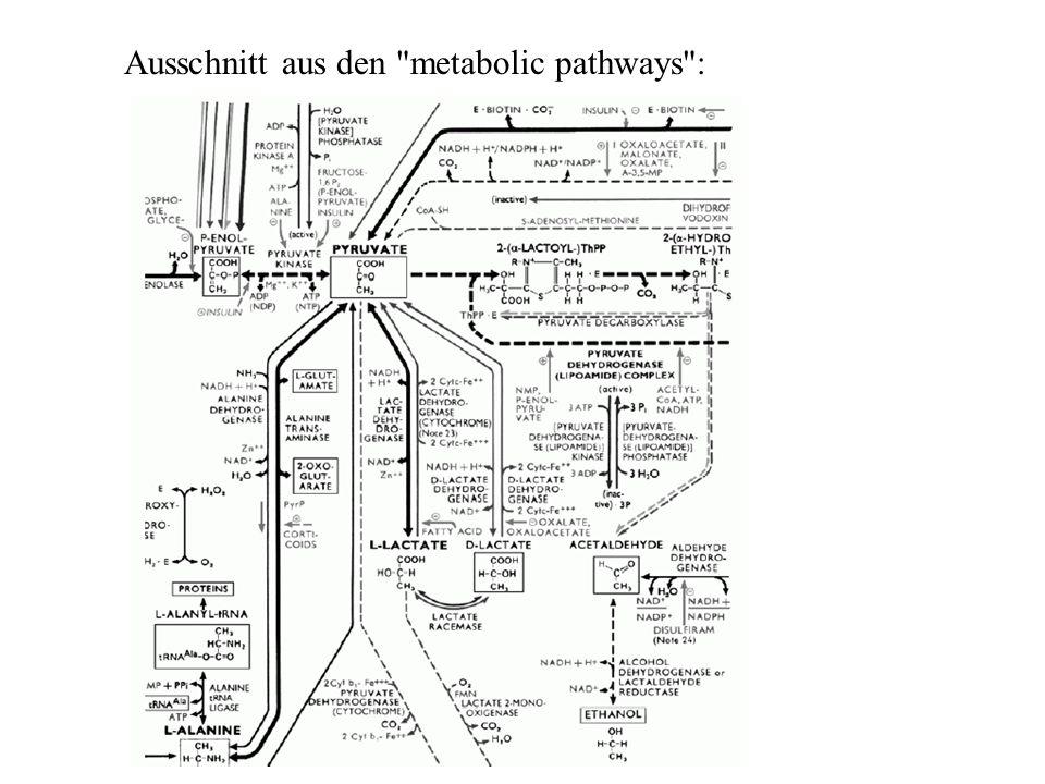 Ausschnitt aus den metabolic pathways :
